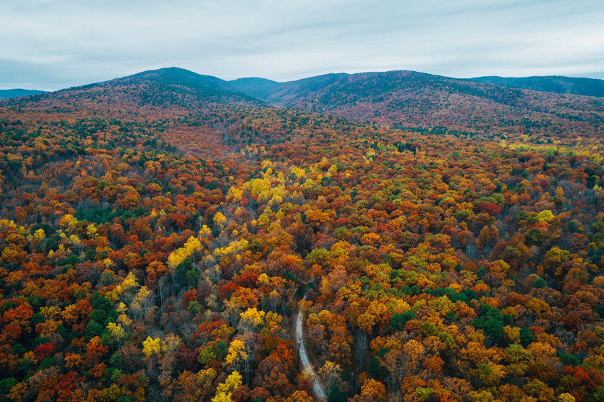 Fall Foliage in New River Valley